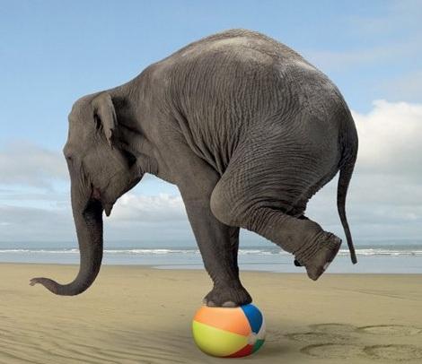 elephant balance